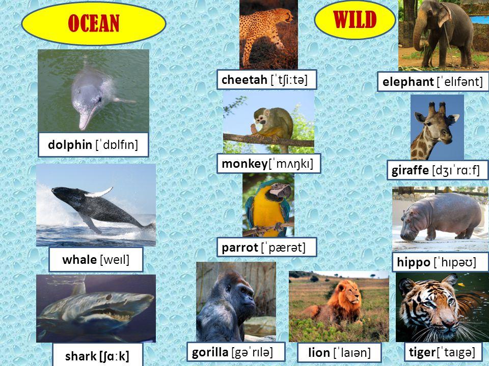 WILD OCEAN cheetah [ˈtʃiːtə] elephant [ˈelɪfənt] dolphin [ˈdɒlfɪn]